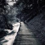 Path © Mikko Lagerstedt