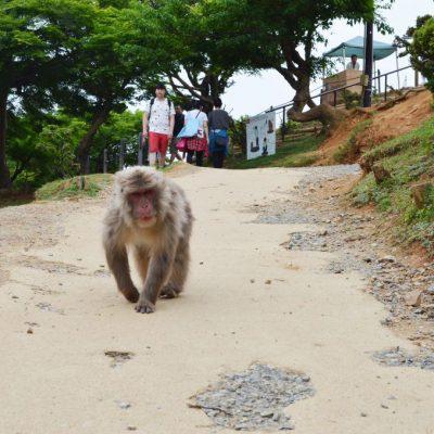 monkey Kyoto
